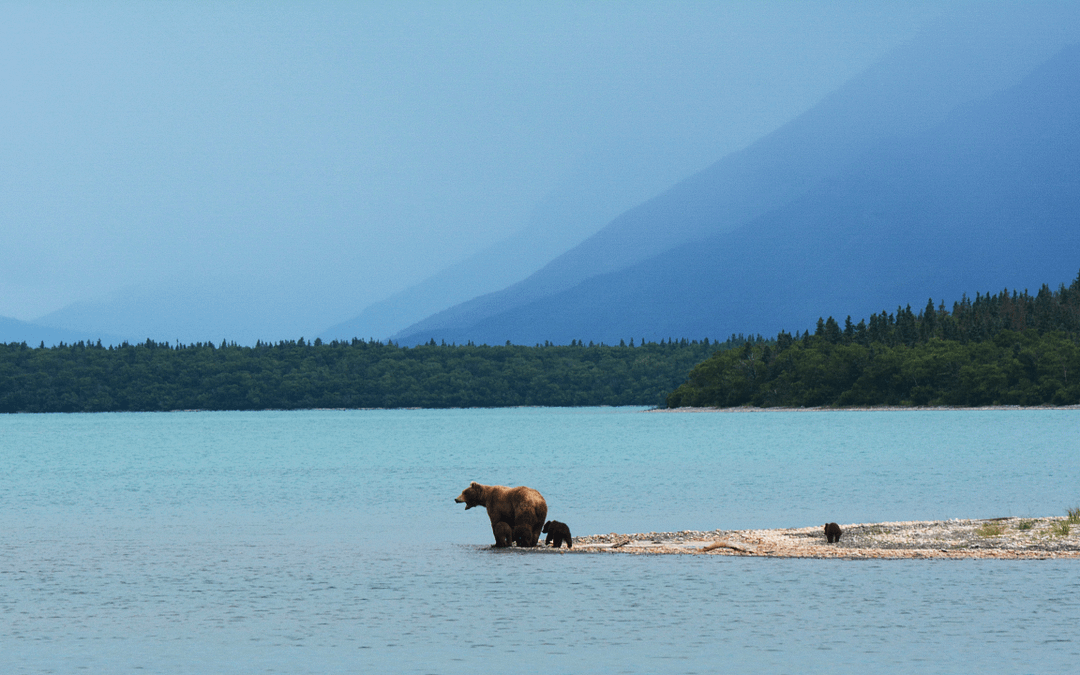 Top 6 Things To Do on Your Alaskan Cruise